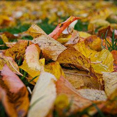 Leaf Removal Tips for Speeding Up the Work